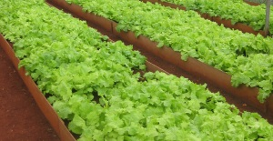 Organic urban farm in Cuba
